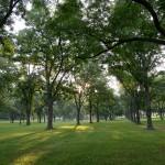Pecan-Grove-7-31-2014-web-DSC_6870