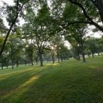 Run through grove