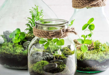 March 12, 2019 - Make Your Own Terrariums Workshop